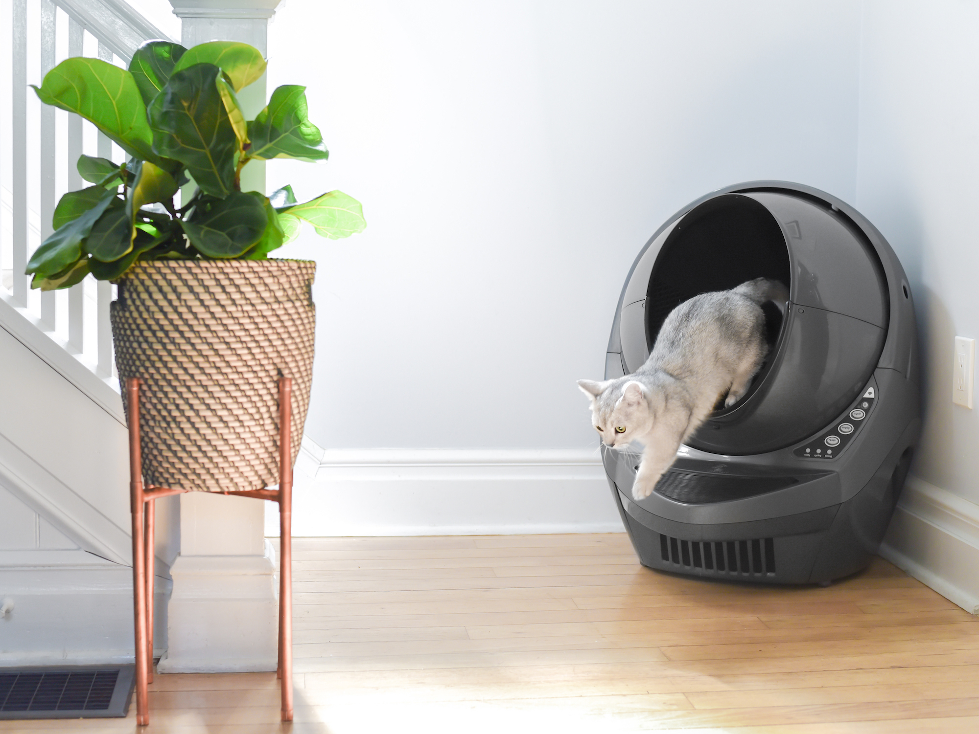Win a Litter-Robot - May Giveaway Image